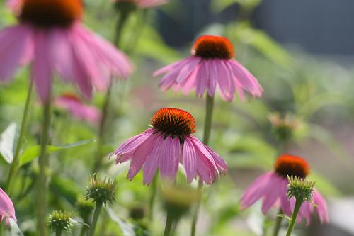 20210720 zomer bloemen en bijen [jan vonk]13