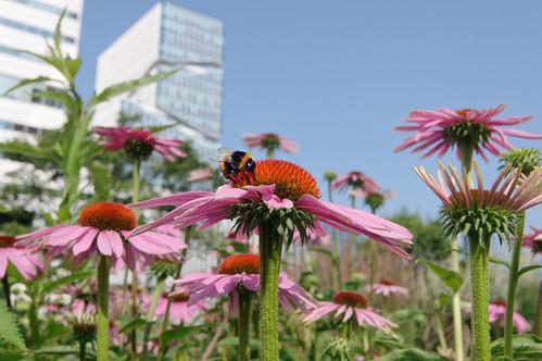 20210720 zomer bloemen en bijen [jan vonk]5