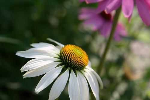 20210720 zomer bloemen en bijen [jan vonk]10