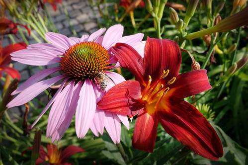 20210720 zomer bloemen en bijen [jan vonk]6