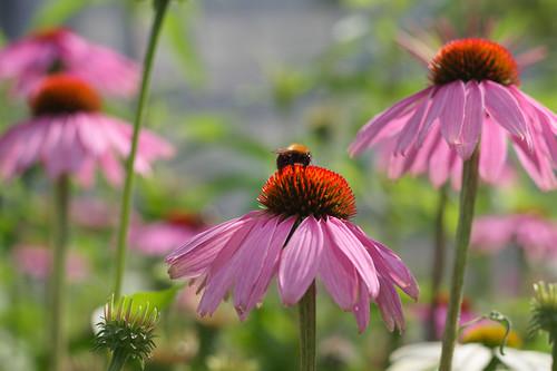 20210720 zomer bloemen en bijen [jan vonk]11