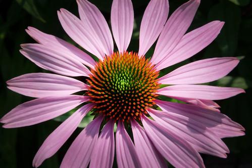 20210720 zomer bloemen en bijen [jan vonk]7
