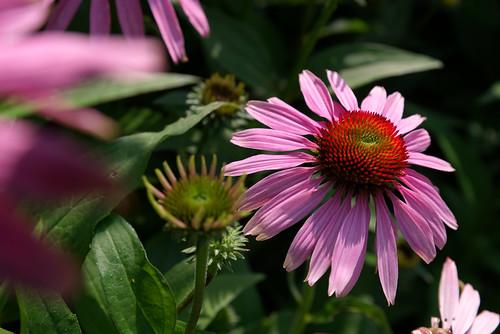 20210720 zomer bloemen en bijen [jan vonk]9