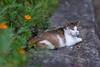 Photo:Stray cat hanging out in Kawasaki, Japan By shaunstreeper