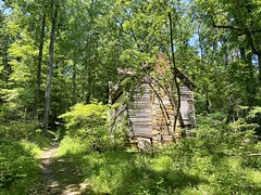 Fern Hollow Hike