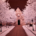 Infrared of the day 70