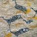 Guanacos en pinturas rupestres 2 (FB)