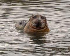 Seal 48