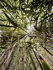 Bamboo heights