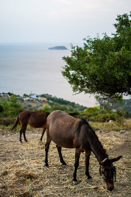 Horses in Alonissos Island, Greece