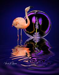 When Flamingoes Dream
