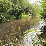 River Loddon near to Piggy Dam and Lower Mill