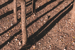 The Shadows in the Forest