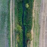 Loddon -0602 River Loddon Detail