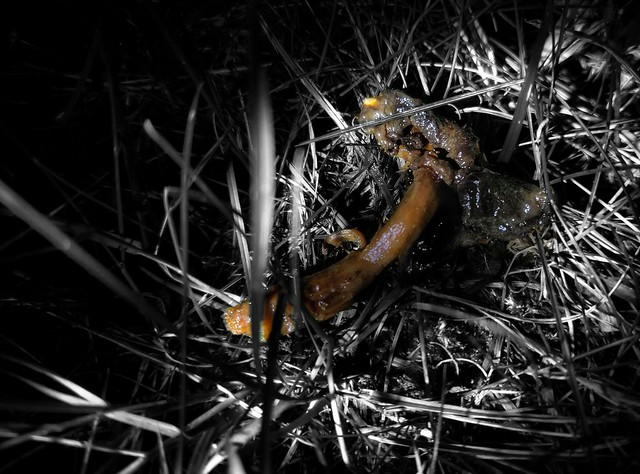Poisoned mushroom