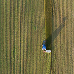 Loddon -0564 Grass Cutting near to Poors Farm