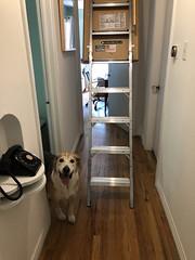 new attic door 2