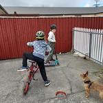Many dog walks/bike rides