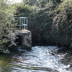 Poo Corner on the River Loddon near to the sewage outfall