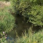 River Loddon near Whitmarsh