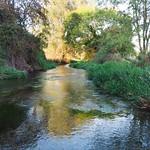 East of Decoy Pond on the River Loddon