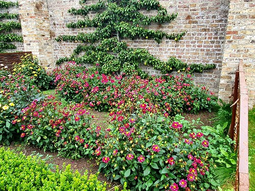 A visit to the walled garden in Phoenix  Park Dublin. 💐🌹🌸🌼💐🌹