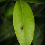 02 Lonesome Bug by Rob Draper