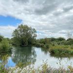 Arundel wetlands by Jane Needham