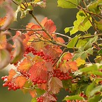 Autumn is coming by Raymond PoulterAutumn is coming