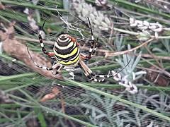 Araignées et insectes