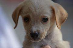 Smallest Yoghurt Pot Pup