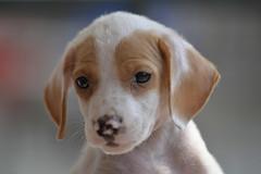 Last but not Least Yoghurt Pup