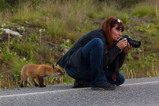 Photo:Sly-Fox By Alceste09