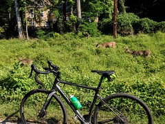 2021 Bike 180: Day 117 - Stag Party