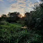 The Green Loddon Valley