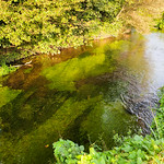 Chalk Stream Plantlife