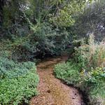 River Loddon near Old Basing