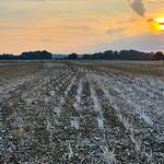 Loddon Valley Field Sunset
