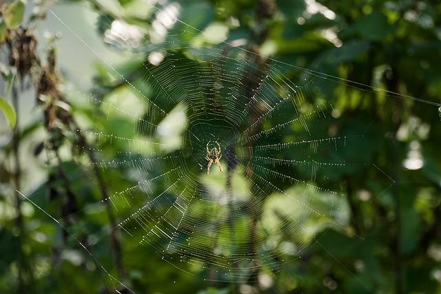 Photo:Spider in the web in the morning sun By Frans Berkelaar