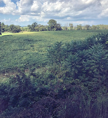 From the Train Window, Whereafter We Were Attacked by Confederates, Walkersville, Maryland, September 2021