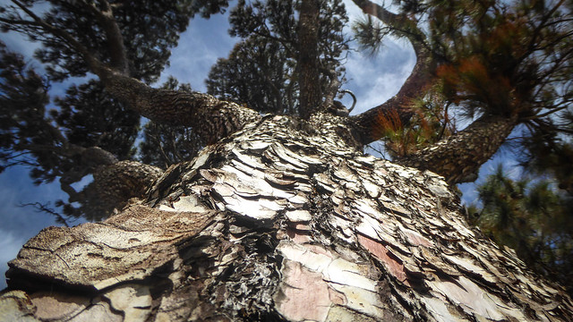 Photo:Dessicated Bark By Theen ...