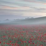 3rd Colour Print League 1 - Poppies in the Mist by Steve Baldwin