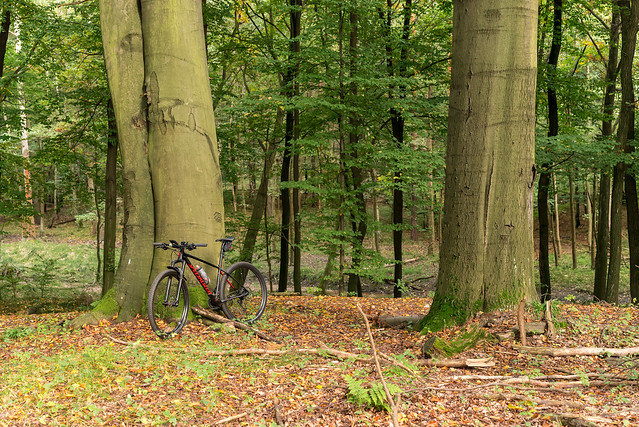 By bike - Beech Reserve 1