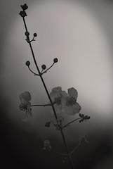 Flowers In The Haze.-1