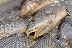 Fresh fish at Cocos Food