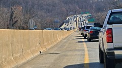 Rubbernecking on the Capital Beltway