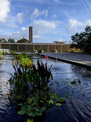 Water garden 2