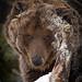 Best of Show - Hibernation Stare Down © Steve Cochrane - 1st in Fauna