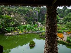 Morning at the Tea Garden