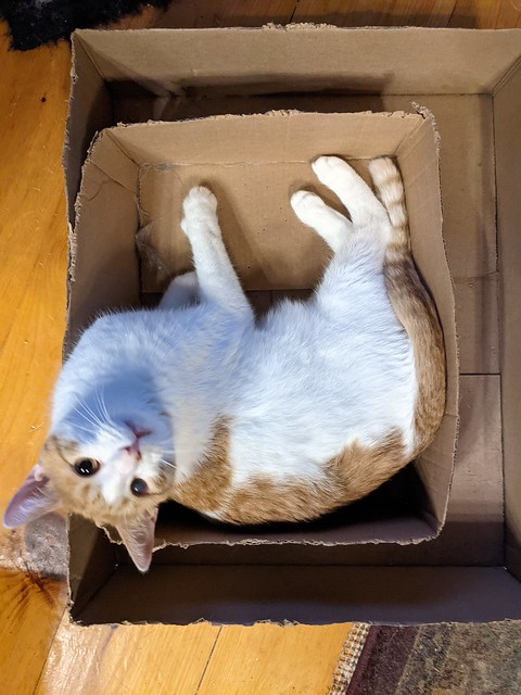 Photo:Cat ina 4D Box By Stephen Downes